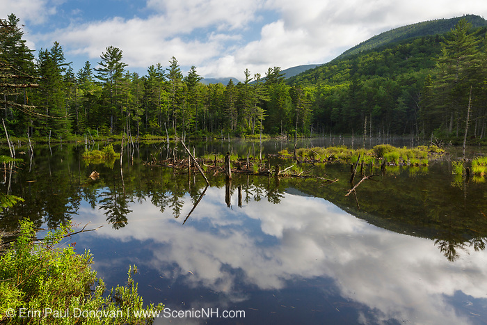 Beaver Pond along Franconia Brook Trail in the Pemigewasset Wilderness of New Hampshire during the summer months. This trail follows the Franconia Branch of the old East Branch & Lincoln Railroad (1893-1948).