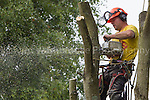 Philip Allen Tree Surgeon - Tree of Heaven  22nd August 2013