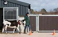 BNPS.co.uk (01202) 558833. <br /> Pic: CorinMesser/BNPS<br /> <br /> Cones are a strange thing if you've never seen one in your field before. <br /> <br /> A donkey sanctuary is running its own 'finishing school' to help the animals adjust to the outside world once they are re-homed.<br /> <br /> The 12 week program, initiated by The Donkey Sanctuary in Sidmouth, Devon, is believed to be the first of its kind in Britain.<br /> <br /> Activities include walking under bunting, navigating traffic cones and getting used to people carrying umbrellas.<br /> <br /> There are also tutorials on feeding, grooming and handling for the donkeys' prospective guardians.<br /> <br /> The initiative started in November 2019, with a current intake of 31 donkeys. Eight donkeys having already gone to homes.