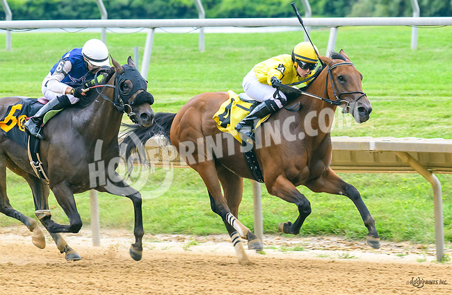 Pistol Posse winning at Delaware Park on 7/1/17