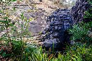 Image Ref: CA276<br /> Location: Sheoak Hike, Great Ocean Road<br /> Date of Shot: 26.04.18