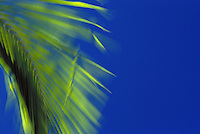 A bright green palm frond flutters with the trade winds against a vibrant blue sky.