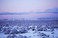Male Sage Grouse strutting on snow covered lek in eastern Oregon's high desert region.  Photo taken before sunrise.