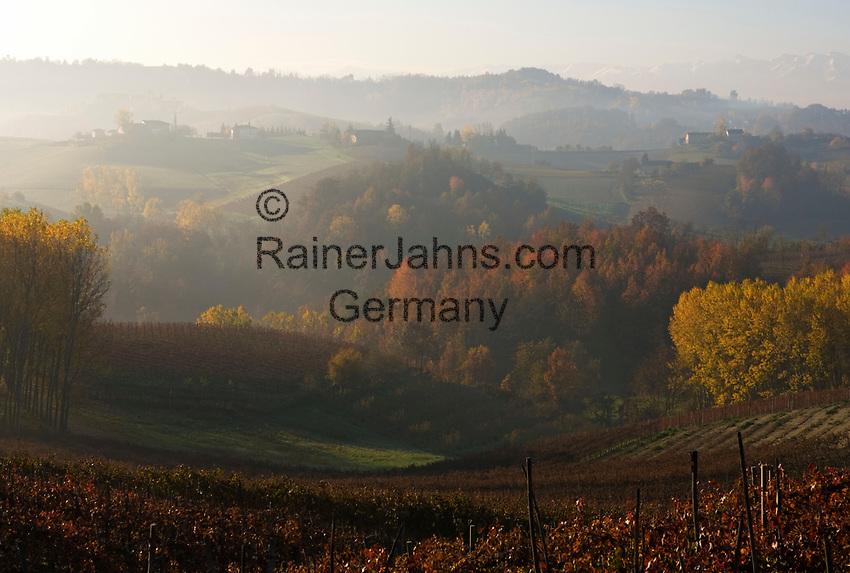 Italien, Piemont, Region Langhe, Weinberge vor der Bergkette Alpi Cozi | Italy, Piedmont, Region Langhe, vineyard, Alpi Cozi mountains