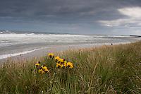 North Sea between Bamburgh and Seahouses, Northumberland.