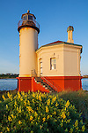 Bandon, Oregon   <br /> Morning sun on the Coquille River Lighthouse and flowering sulphur lupine