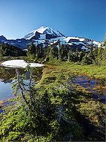 Subalpine meadow with ponds, Spray Park, Mount Rainier National Park, Washington State, USA