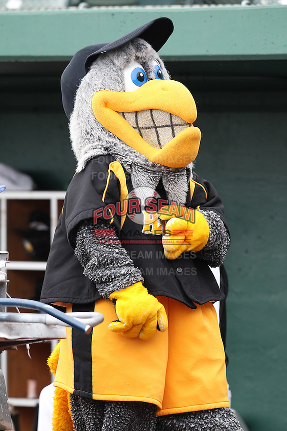 South Bend Silver Hawks mascot during a game against the Kane County Cougars at Coveleski Stadium on July 24, 2011 in South Bend, Indiana.  Kane County defeated South Bend 7-5.  (Mike Janes/Four Seam Images)