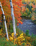 Pattison State Park, WI<br /> View of the Black River flowing through a hardwood forest in fall color