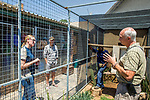 Black-footed Cat (Felis nigripes) studbook keeper, Kara Heynis, talking to biologist, Alex Sliwa, and veterinarian, Arne Lawrenz, about improving captive setting, Lory Park Zoo, Midrand, South Africa