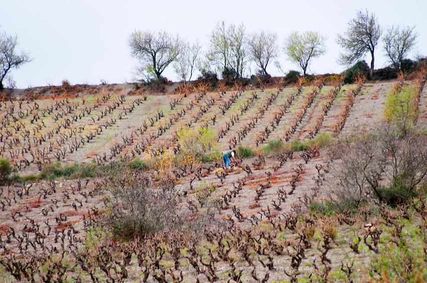 Domaine Grand Guilhem. In Cascastel-des-Corbieres. Fitou. Languedoc. The vineyard. France. Europe.