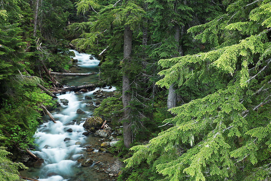 Panther Creek running through forest, Mount Rainier National Park, Washington, USA