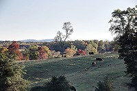 Scenic views in Orange County, Va.  Photo/Andrew Shurtleff Photography, LLC