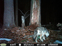 SVT Camera Trap Photos - March 14-22, 2011