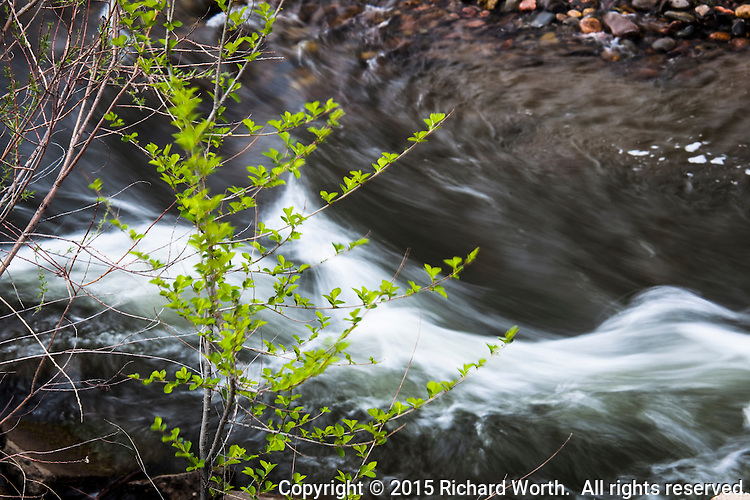 Leaves hover over the Arkansas River as it flows eastward from the spine of the Rockies, the continental divide.