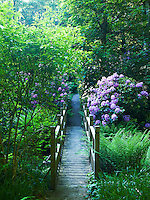 A contemporary wooden footbridge crosses a stream as a path winds its way through the woodland on the estate
