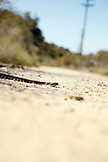 USA, Los Angeles, a rattlesnake getting sun in the road at the end of Mulholland Dr.