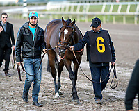 HALLANDALE BEACH, FL - JAN 06: Mask #6 is led from the barn to the paddock prior to the running of The $100,000 Mucho Macho Man Stakes for trainer Chad. C. Brown at Gulfstream Park on January 6, 2018 in Hallandale Beach, Florida. (Photo by Bob Aaron/Eclipse Sportswire/Getty Images)