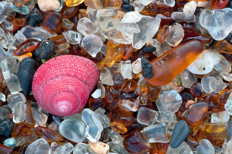 Seashell at Glass Beach. Kauai, Hawaii.