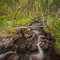 Small stream runs through mountain birch forest, Senja, Norway