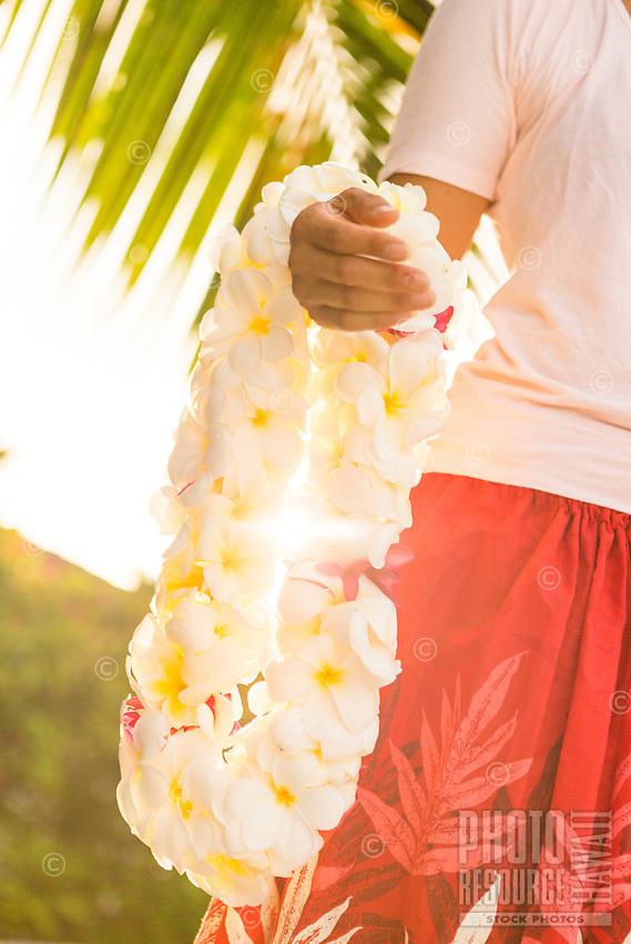 A hula dancer holds a white plumeria lei that she made, Waialua, North Shore, O'ahu.