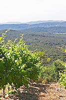 Vineyard. Mas Montel, Sommieres, Languedoc, France