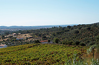 vineyards monte da penha alentejo portugal