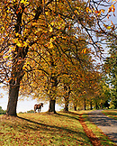 AUSTRIA, Bernstein, the road leading up to the Burg Bernstein Castle and Hotel, Burgenland