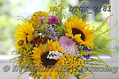 Gisela, FLOWERS, BLUMEN, FLORES, photos+++++,DTGK2181,#f# ,sunflowers