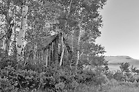 Old historic cabin with aspens. Near Denio. Nevada
