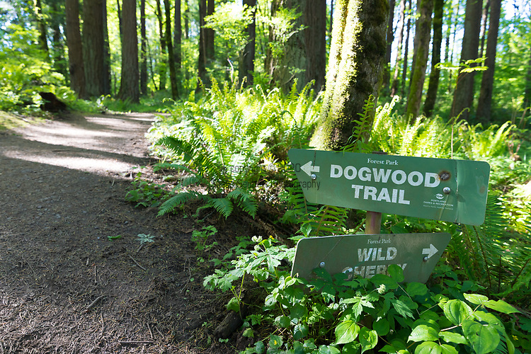 Trails in Forest Park in Portland, Oregon