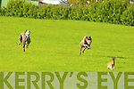 Action shots from the Coursing meeting in Cahills Park, Castleisland on Sunday