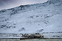 13/01/15<br /> <br /> Sheep huddle for warmth near Buxton in the Derbyshire Peak District ahead of forecast further heavy snow showers across the country.<br /> <br /> <br /> All Rights Reserved - F Stop Press. www.fstoppress.com. Tel: +44 (0)1335 300098