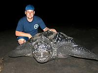 marine biologist Rowan Byrne with nesting leatherback sea turtle, Dermochelys coriacea, Dominica, West Indies, Caribbean, Atlantic