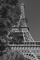 Black and White Portrait of Eiffel Tower through park trees.  Paris.  Shot from park at the base of the tower.  Clear,Cloudless morning.