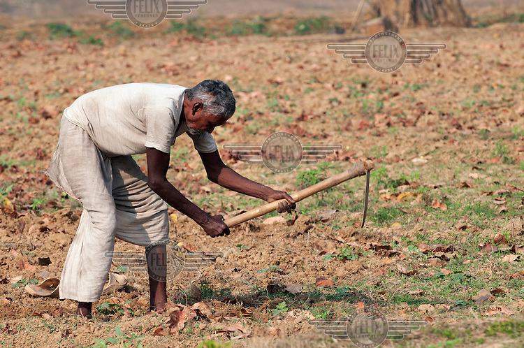 A man works in his field in the village of Idulbera. Due to the irrigation system built with the assistance of TSRDS (Tata Steel Rural Development Society), the farmers can now plant a second crop even in the dry season.