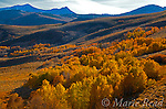 View from Conway Summit, looking southwest, with aspens in autumn, peaks of Sierra Nevada in background, Mono Lake Basin, California, USA