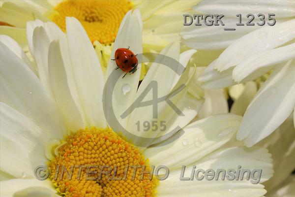 Gisela, FLOWERS, photos(DTGK1235,#F#) Blumen, flores, retrato