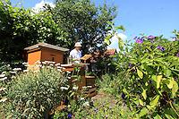 Sebastian Spiewok, pendant l'inspection d'un ruche. Sebastian as la chance d'avoir ses ruches installées dans un jardin ouvrier comme il y en a beaucoup à Berlin. En effet, la compagnie de chemins de fer allemand avait l'habitude de garder des terrains autours des voies et de distribuer ces terrains à ses employés. Une solution habile pour pouvoir garder des terrains pour de nouvelles constructions. Très passé de mode pendant longtemps, les terrains des jardins ouvriers ont intéressé les promoteurs immobiliers pendant quelques années…mais aujourd'hui, la tendance s'inverse. Les jardins sont a nouveau très convoités par la génération des trentenaires./// Sebastian Spiewok during the inspection of a hive. Sebastian is fortunate to have his hives set up in a garden allotment, of which there are many in Berlin. As it was, the German railway company had the custom of keeping the land around the tracks for their employers. Also, a clever way of keeping land for eventual new construction: out of fashion for a long time, the land with the allotments interested real estate speculators during a few years, but today, the tendency has reversed itself. The gardens are once again much coveted by the thirty-somethings.