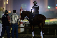 HALLANDALE, FL - JANUARY 27: California Chrome, ridden by exercise rider Dihigi Gladney, enters the track for warmups at Gulfstream Park Race Course on January 27, 2017 in Hallandale Beach, Florida. (Photo by Douglas DeFelice/Eclipse Sportswire/Getty Images)