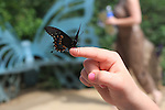 swallowtail butterfly on finger at Butterflies Alive, The Living Desert