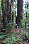 Hiker at Forest of Nisene Marks in Aptos