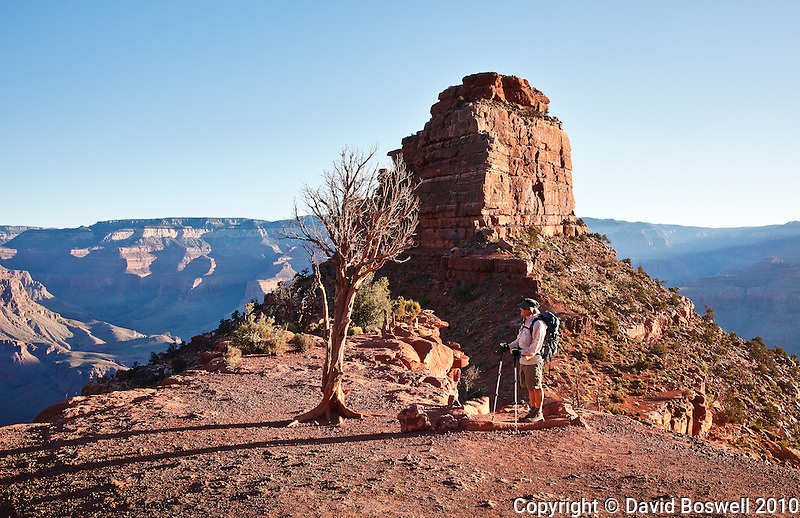 A hiker on the South Kaibab Trail in the Grand Canyon, Arizona just after sunrise, with Oneill Butte in the background.