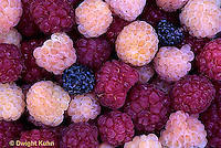HS34-009b  Raspberries - mixed varieties
