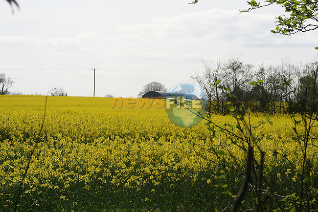 Fields of Rapeseed (Brassica napus) at An Grianan Horticultural Centre, Termonfeckin...Photo NEWSFILE/Jenny Matthews.(Photo credit should read Jenny Matthews/NEWSFILE)....This Picture has been sent you under the condtions enclosed by:.Newsfile Ltd..The Studio,.Millmount Abbey,.Drogheda,.Co Meath..Ireland..Tel: +353(0)41-9871240.Fax: +353(0)41-9871260.GSM: +353(0)86-2500958.email: pictures@newsfile.ie.www.newsfile.ie.FTP: 193.120.102.198.
