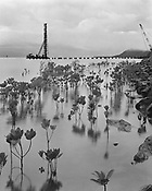 The Stump Thumper, Construction of the Cairns Pier, March 2000<br /> <br /> During the early days of the Cairns Pier development the streets of Cairns echoed with the booming of large posts being pounded into the harbour bed to support pier structures.