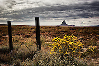 Chamisa in bloom and a fence with Shiprock in the distance.
