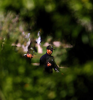 Tiger Woods (right) is framed by trees as he walks with his caddie Steve Williams during the Ford Championships at Doral Golf Resort & Spa in Miami, Fl. (Rick Wilson/The Florida Times-Union)