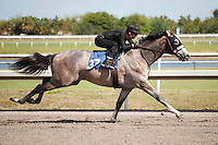 #37Fasig-Tipton Florida Sale,Under Tack Show. Palm Meadows Florida 03-23-2012 Arron Haggart/Eclipse Sportswire.
