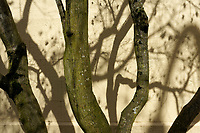 Tree trunks and bare branches casting shadows forming an abstract design on a yellow wall